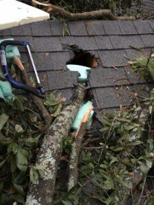 Hurricane Damage - Tree