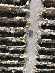 Growth from a pad of an evaporative cooler that was not maintained properly